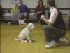 Embedded thumbnail for Off with Charlotte - SIRIUS Puppy Training Classic
