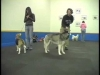 Embedded thumbnail for Walk On Leash – Starts Slowly – SIRIUS Adult Dog Training