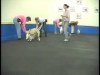 Embedded thumbnail for Sit During Play 1 Collar Grab – SIRIUS Adult Dog Training