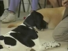 Embedded thumbnail for Improving Stays 2 - Training the Companion Dog 4 – Recalls & Stays