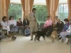 Embedded thumbnail for Excessively Excited - Training the Companion Dog 1 – Socialization & Training