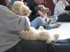 Embedded thumbnail for Week 5 Part 2 (SIRIUS Berkeley Puppy 1)
