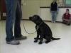 Embedded thumbnail for Week 4 Part 2 (SIRIUS Berkeley Puppy 1)