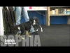Embedded thumbnail for 17 German Shepherd Puppies Visit SIRIUS El Cerrito