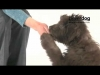 Embedded thumbnail for Sarah Whitehead - Your Clever Dog