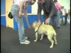 Embedded thumbnail for Stand Stay – SIRIUS Adult Dog Training