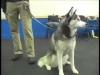 Embedded thumbnail for More Reward Training – SIRIUS Adult Dog Training