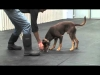 """Embedded thumbnail for Teaching your Dog to """"Drop"""""""