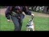 Embedded thumbnail for (Part 1) David Hogan - David the Dog Trainer