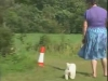 Embedded thumbnail for Heeling Course - Training the Companion Dog 3 – Walking & Heeling