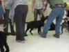 Embedded thumbnail for Week 1 Part 2 (SIRIUS Berkeley Puppy 1)