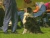 Embedded thumbnail for Dog Whispering Reprimands- Training Dogs with Dunbar