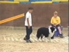 Embedded thumbnail for AGILITY Speed Up & Slow Down - Dog Training for Children