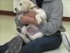 Embedded thumbnail for Week 1 Part 1 (SIRIUS Berkeley Puppy 1)