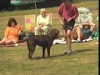Embedded thumbnail for Training with Toys - Dog Training for Children