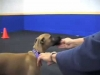 Embedded thumbnail for Stays - SIRIUS Puppy Training Redux
