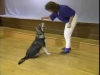 Embedded thumbnail for Come Here & Go To - SIRIUS Puppy Training Classic