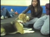 Embedded thumbnail for Classical Conditioning – SIRIUS Adult Dog Training