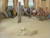 Embedded thumbnail for Proofing Jinty's Down Stay - Training the Companion Dog 4 – Recalls & Stays