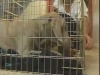 Embedded thumbnail for Introducing a Crate - Training the Companion Dog 2 – Behavior Problems