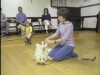 Embedded thumbnail for Grooming - SIRIUS Puppy Training Classic