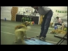 Embedded thumbnail for (Part 1) Bridget Brady – Narnia Pet Behavior and Training