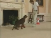 Embedded thumbnail for Sit, Heel, Sit - Training the Companion Dog 3 – Walking & Heeling