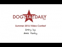 Embedded thumbnail for A Dog's Summer (Dog Star Daily Video Contest Entry)