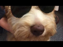 Embedded thumbnail for Sunny in Summer