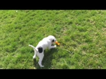 Embedded thumbnail for Puppy's Easter Fun