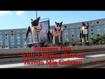 Embedded thumbnail for Summer Fun with 3 Boston Terriers
