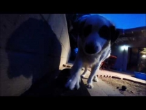 Embedded thumbnail for Skate Board & Romping Evening Summer Fun
