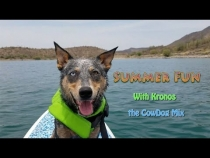 Embedded thumbnail for Summer Fun with Kronos the CowDog Mix