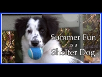 Embedded thumbnail for Summer Fun is a Shelter Dog
