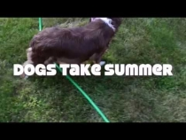 Embedded thumbnail for Dogs Take Summer!