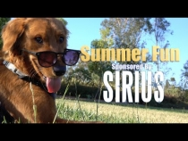 Embedded thumbnail for Puppy's First Summer