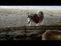 Embedded thumbnail for Beach Recall