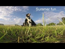 Embedded thumbnail for Dewey & Blaze Summer Fun