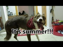 Embedded thumbnail for A Dog's Fun Summer Day