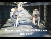 Embedded thumbnail for Recall off difficult terrain & prey with water!