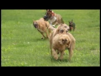 Embedded thumbnail for Pet Karma Dog Training Summer Fun Video Contest