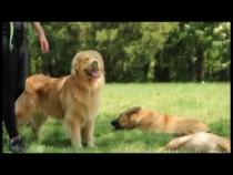 Embedded thumbnail for Pet Karma Dog Training Summer Fun