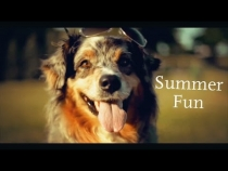 Embedded thumbnail for Happy Dog Summer Adventure!